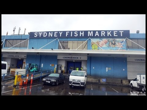 Sydney Fish Market Tour