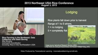Mia Murphy - Rice Farming in the Northeast: Data Collection and Seed Saving