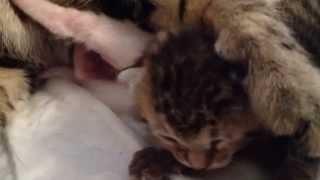 Котенок открыл впервые глазки