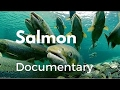 Discovery Channel Documentaries Wild Life Animals Hd Animal Planet 2016 Nature Documentary video