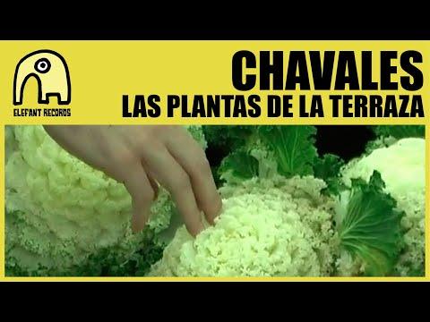 CHAVALES - Las Plantas De La Terraza [Official]