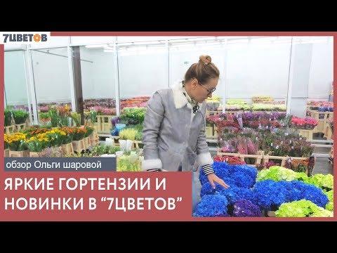 Море гортензий в 7ЦВЕТОВ! Обзор поставки с Ольгой Шаровой