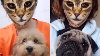 Dogs hilarious reaction when they see cat filter on owners' faces | Funny Dog Videos 2019