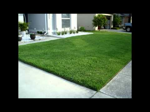 New Empire Zoysia Lawn Installation - High Maintenance Landscape Contractors