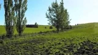 Dairy Industry In New Zealand