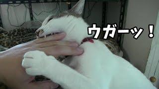 子猫時代は手に走る激痛が目覚ましでした.