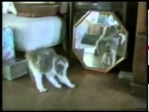 Vdeo clip Mèo vui nhộn.flv