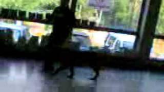 izhpets.ru - Выставка собак 21.08.11 - Бульмастиф