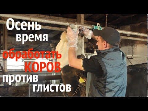 Обработайте коров против глистов!