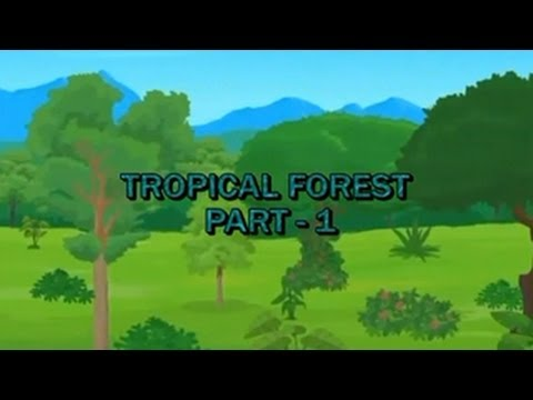 Learn Biomes | Tropical Forest | Part 1
