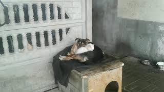 Жить как кошка с собакой!