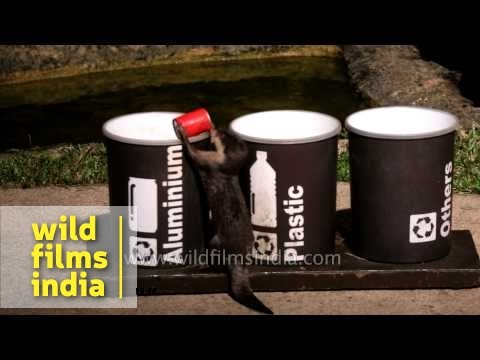 Otters collecting items for recycling at Singapore Zoo's Night Safari