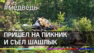 Медведь-халявщик: пришёл на пикник и съел шашлык