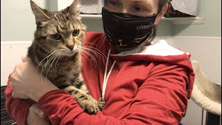 Cat has a 'fight for life' spirit