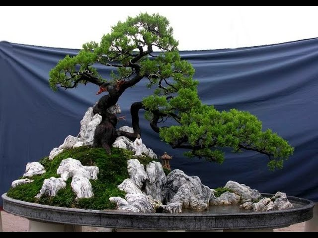 Vietnamese Bonsai Landscapes - Tieu Canh