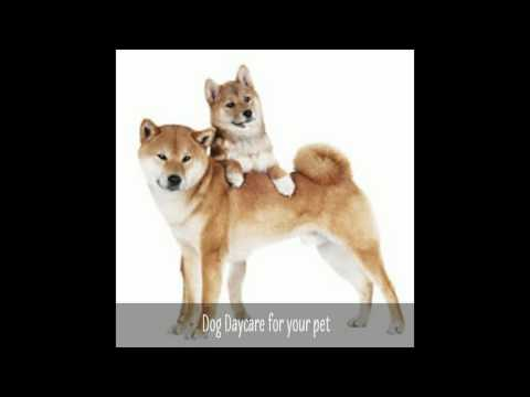 Dogtopia Of North Austin   Dog Daycare Center And Pet Boarding   (512) 333-1111