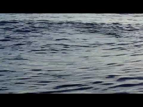 White Beaked Dolphins On The Ocean Explorer