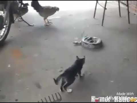 Cats funny pranks 😂😂