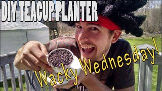 *premier* Wacky Wednesday - Diy Teacup Flower Planter