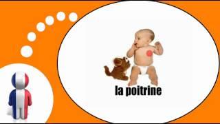 урок французского языка = Тело человека № 1