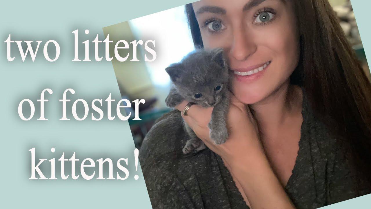 Rescuing Seven Kittens