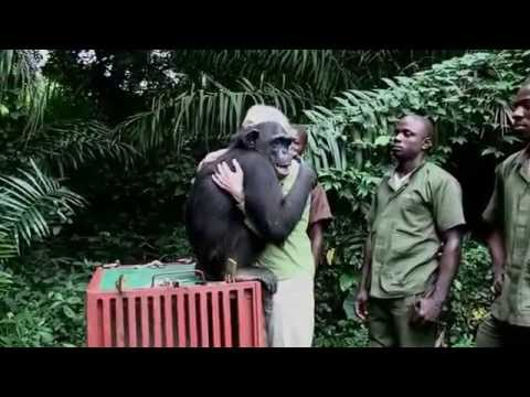 "Special Video: ""The Hug"" and Notes on Jane Goodall"