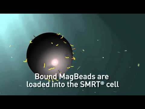 Using MagBeads to load SMRTbells in the PacBio RS II