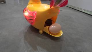 Egg laying duck