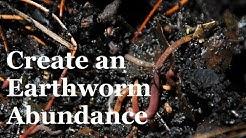 How to create an Abundance of Earthworms in your Garden