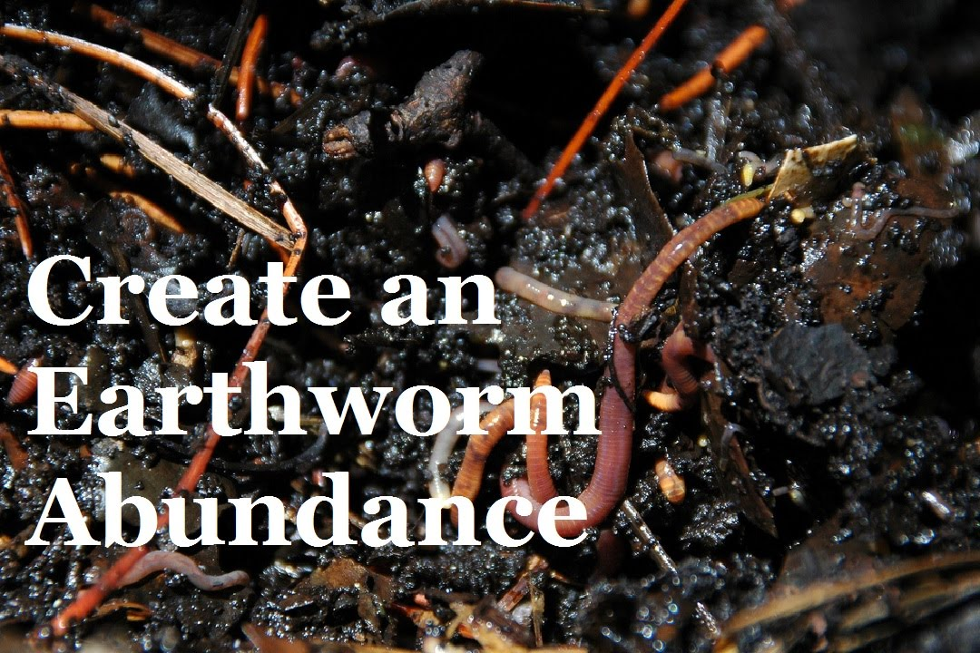 How to create an Abundance of Earthworms in your Garden