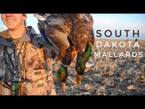 South Dakota Mallard Hunt - Oct 27, 2018