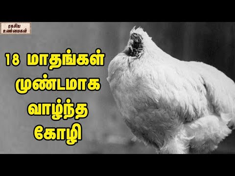 The True Story Of Headless Chicken || Unknown Facts Tamil