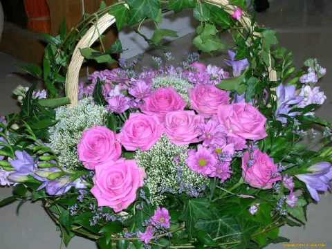 Цветущие комнатные растения, фото и название.
