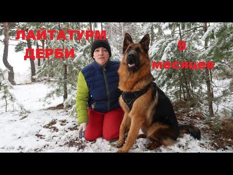 ЛАЙТАТУРМ ДЕРБИ- 9 месяцев//на дрессировке//занятия с щенком//тренинг с собакой