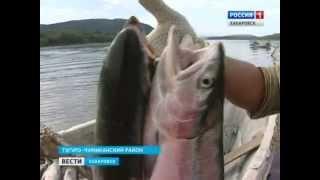Вести-Хабаровск. Небывалый нерест в Тугуро-Чумиканском районе