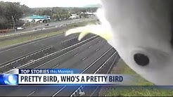 Video Extra: Who's a pretty bird?