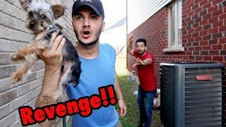 I stole SHAM IDREES's DOG!