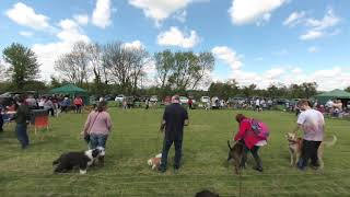 Appledown Dog rescue open day 1st class VR 180