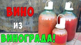 ВИНО из ВИНОГРАДА !!! Виноградное вино ПРОСТОЙ РЕЦЕПТ / Часть 1