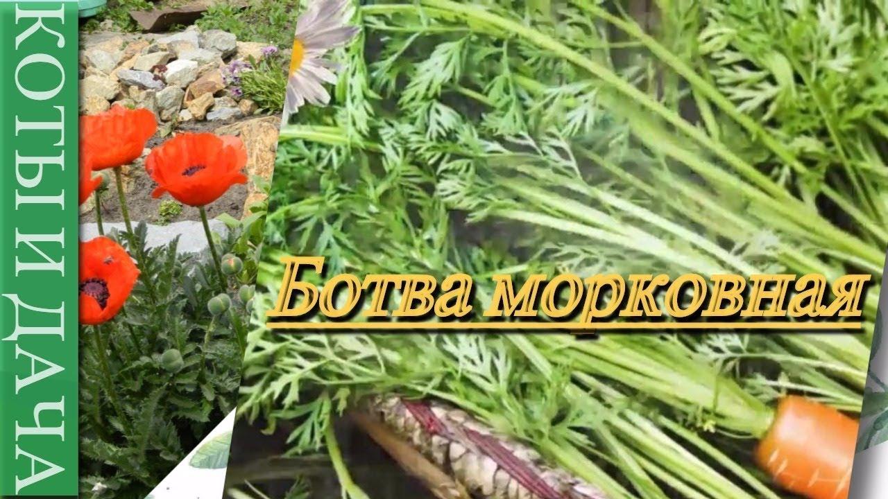 #Ботва морковная -свойства и рецепты приготовления.Ботва на зиму.