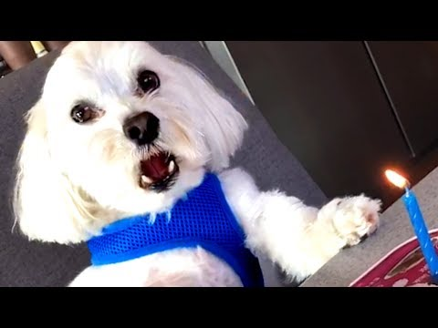 MUST WATCH! CUTE FUNNY ANIMALS VIDEOS OF THE WEEK!