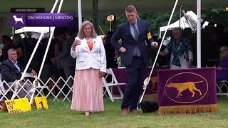 Dachshunds (Smooth) | Breed Judging 2021