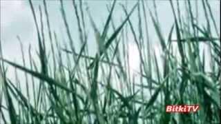 Ayrık Otu hakkında Öğrenmek İstadikleriniz-Bitki TV