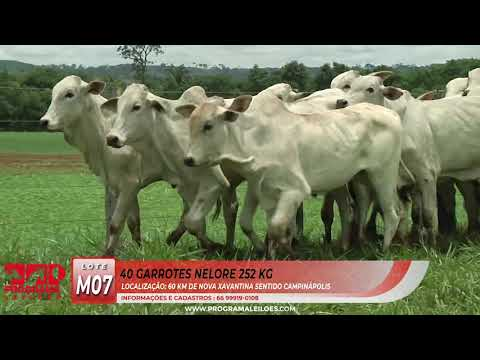 LOTE M07