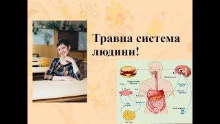 Уроки біології, ЗНО!!! Травна система людини!! Без чого не скласти ЗНО по біології!