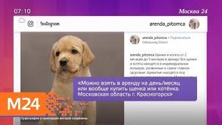 """В Москве работает прокат """"бракованных"""" животных - Москва 24"""