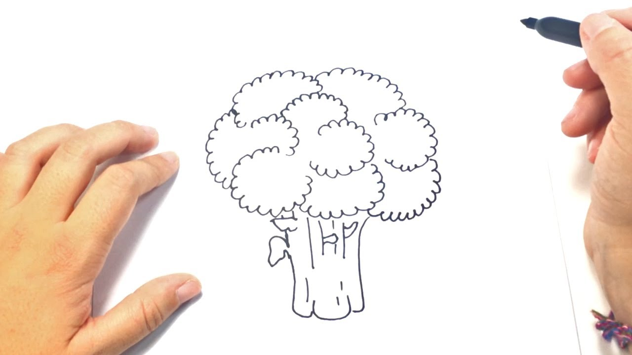 How to draw a Broccoli Step by Step | Broccoli Drawing ...
