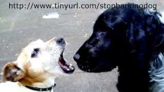 How To Train A Dog Not To Bark - Part 1