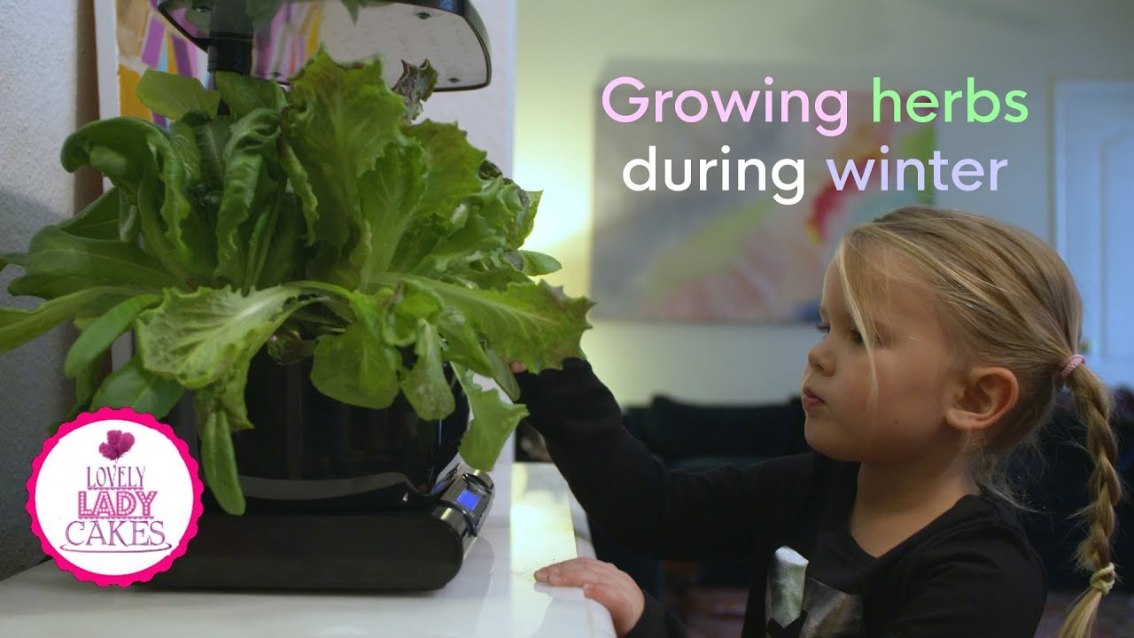 fun things to do with kids grow your own herbs with an aero