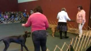 Paula And Fiona - Berks County Kennel Club